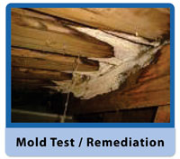 Indianapolis Mold Remediation Removal